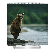 A Brown Bear Standing At Waters Edge Shower Curtain