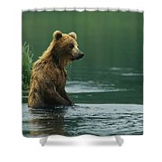 A Brown Bear Standing In Water Hunting Shower Curtain