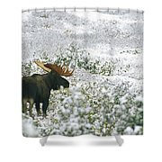 A Bull Moose On A Snow Covered Hillside Shower Curtain