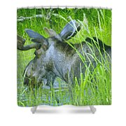 A Bull Moose Wading His Pond Shower Curtain