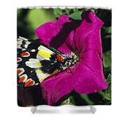 A Butterfly Lands On A Pink Flower Shower Curtain