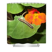 A Caterpillar Eating The Leaves Of A Plant With A Beautiful Orange Flower Shower Curtain