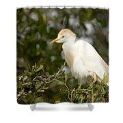 A Cattle Egret Bubulcus Ibis Shower Curtain