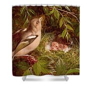 A Chaffinch At Its Nest Shower Curtain