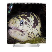 A Chain Moray Eel Peers Out Of Its Hole Shower Curtain