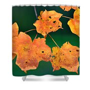 A Change Of Season Shower Curtain