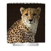 A Cheetah Acinonyx Jubatus Urinates Shower Curtain