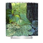 A Cinnamon Vine And Foliose Lichen Shower Curtain