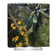 A Close View Of A Beautiful Dendrobium Shower Curtain