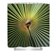 A Close View Of A Palm Frond Shower Curtain