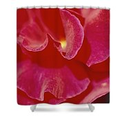 A Close View Of A Rose Shower Curtain