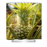 A Close View Of A Tainung Pineapple Shower Curtain