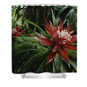 A Close View Of A Tropical, Red Flower Shower Curtain
