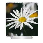A Close View Of A Wild Daisy Shower Curtain