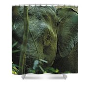 A Close View Of An Asian Elephant Shower Curtain