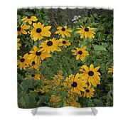 A Close View Of Black-eyed Susans Shower Curtain