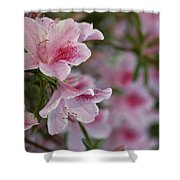 A Close View Of Pink Azalea Blossoms Shower Curtain