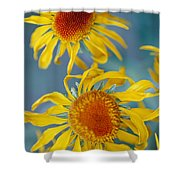 A Close View Of Two Daisies Shower Curtain