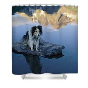 A Collie Perches Itself On A Rock Shower Curtain