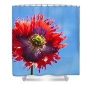 A Colorful Flower With Red And Purple Shower Curtain