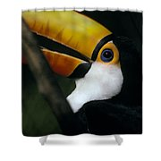 A Colorful Toco Toucans Blue Eye Shower Curtain