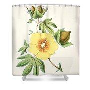 A Cotton Plant Shower Curtain