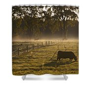 A Cow Grazing In A Field In The Early Shower Curtain