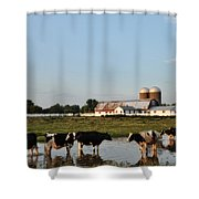 A Cow's Day At The Beach Shower Curtain