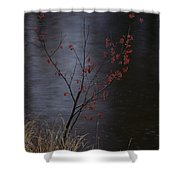 A Delicate Young Tree Blossoms Shower Curtain