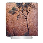 A Desert Bloodwood Tree Against The Red Shower Curtain