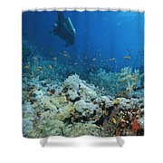 A Diver Explores Coral And Marine Life Shower Curtain