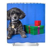 A Dog With Some Gifts Shower Curtain