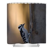 A Downy Woodpecker, Picoides Pubescens Shower Curtain
