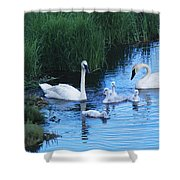 A Family Of Trumpeter Swans Swims Shower Curtain