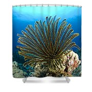 A Feather Star With Arms Extended Shower Curtain