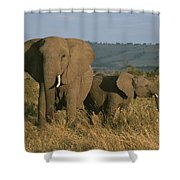 A Female Elephant With Her Baby Shower Curtain