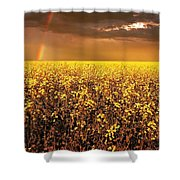 A Field Of Canola With A Rainbow Shower Curtain