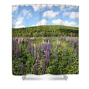 A Field Of Lupines Shower Curtain
