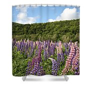 A Field Of Lupins Shower Curtain