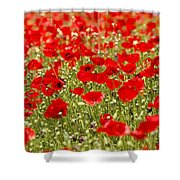 A Field Of Poppies Shower Curtain