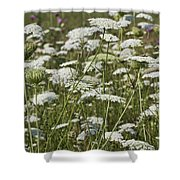 A Field Of Queen Annes Lace Shower Curtain