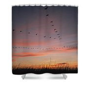 A Flock Of Common Cranes Flying Shower Curtain