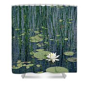 A Flowering Water Lily In Black Shower Curtain