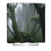 A Fog-enshrouded Rain Forest In Rwandas Shower Curtain