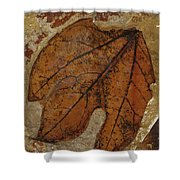 A Fossilized  Sassafras Leaf Shower Curtain