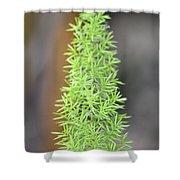 A Foxtail Fern Closeup Shower Curtain