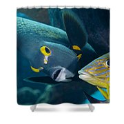 A French Angelfish Swims Up Close Shower Curtain