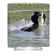 A Fresh Meal Shower Curtain