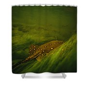 A Freshwater Stingray Swims In A Meadow Shower Curtain