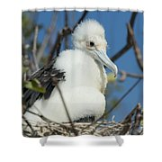 A Frigatebird Sitting In A Nest Shower Curtain